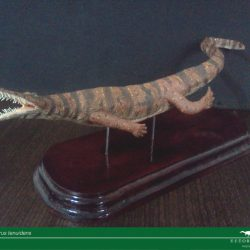 1508_mesosaurus_jose_vitor_e._da_silva