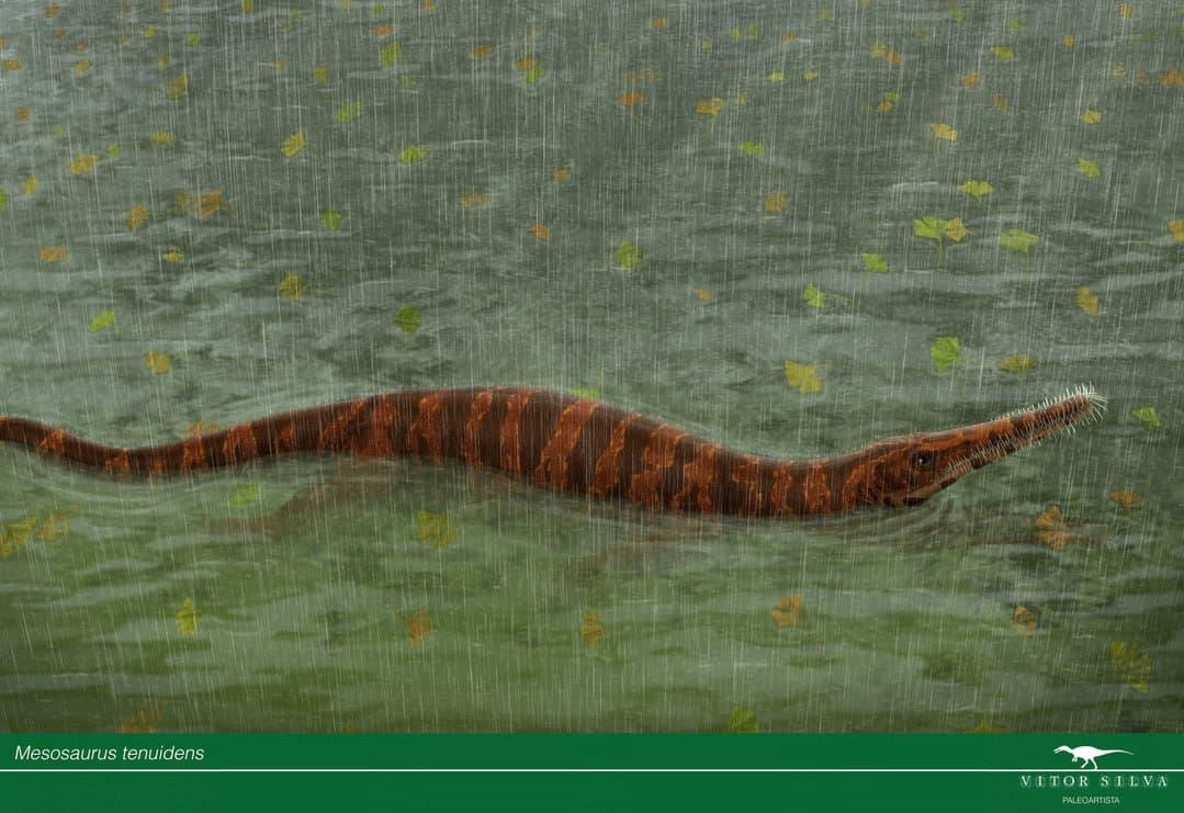 Mesosaurus by Jose Vitor E. Da Silva