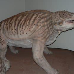 1518_scutosaurus_steve