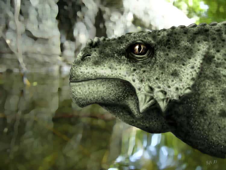 Scutosaurus by Yuriy Priymak