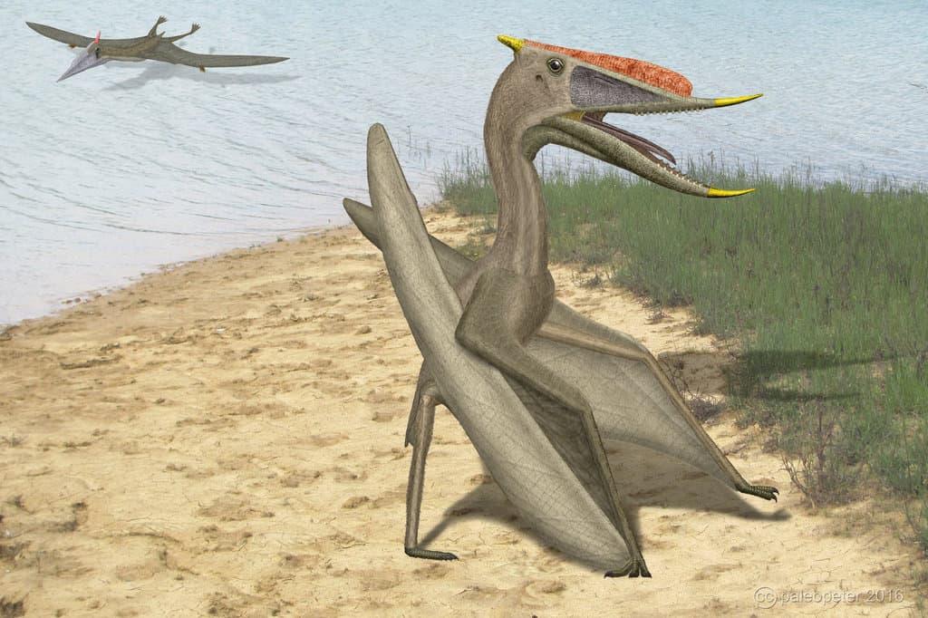 Dsungaripterus by Peter Montgomery