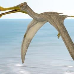 1551_tropeognathus_peter_montgomery