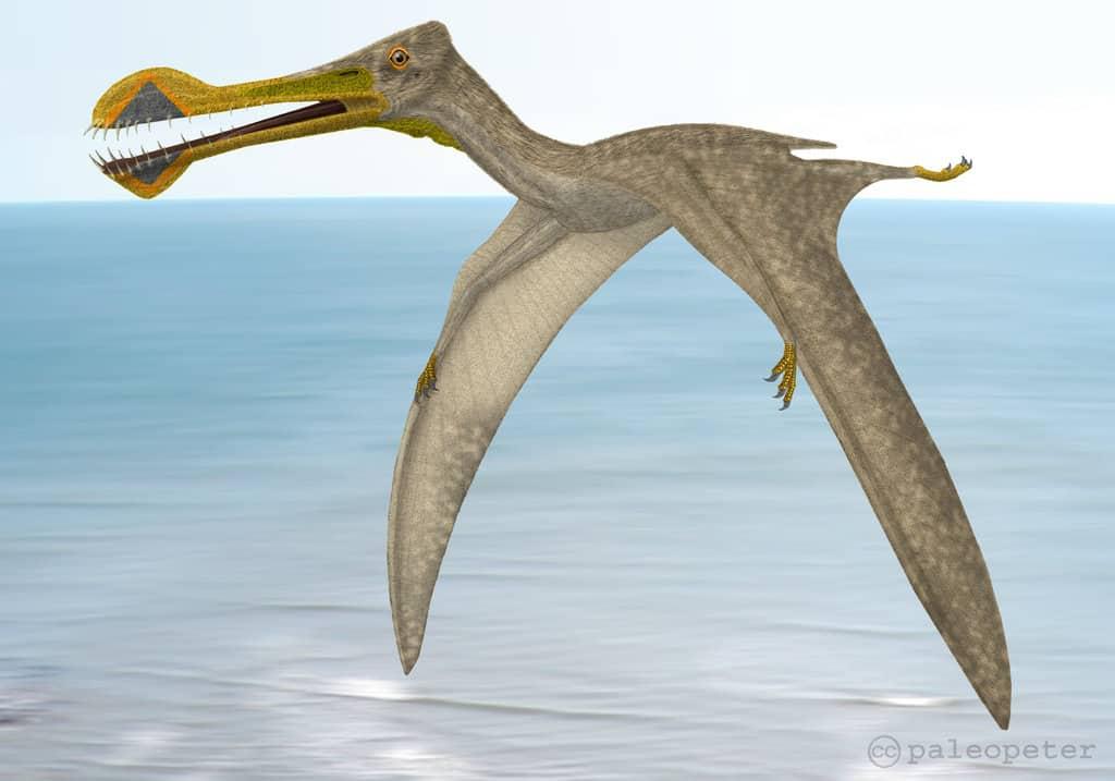 Tropeognathus by Peter Montgomery
