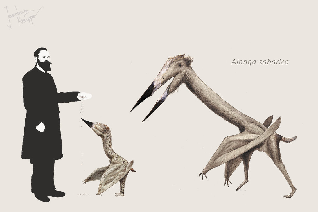 Alanqa by Joschua Knuppe