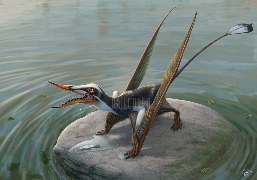 Rhamphorhynchus by Ariel