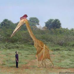 1570_hatzegopteryx_sameerprehistorica