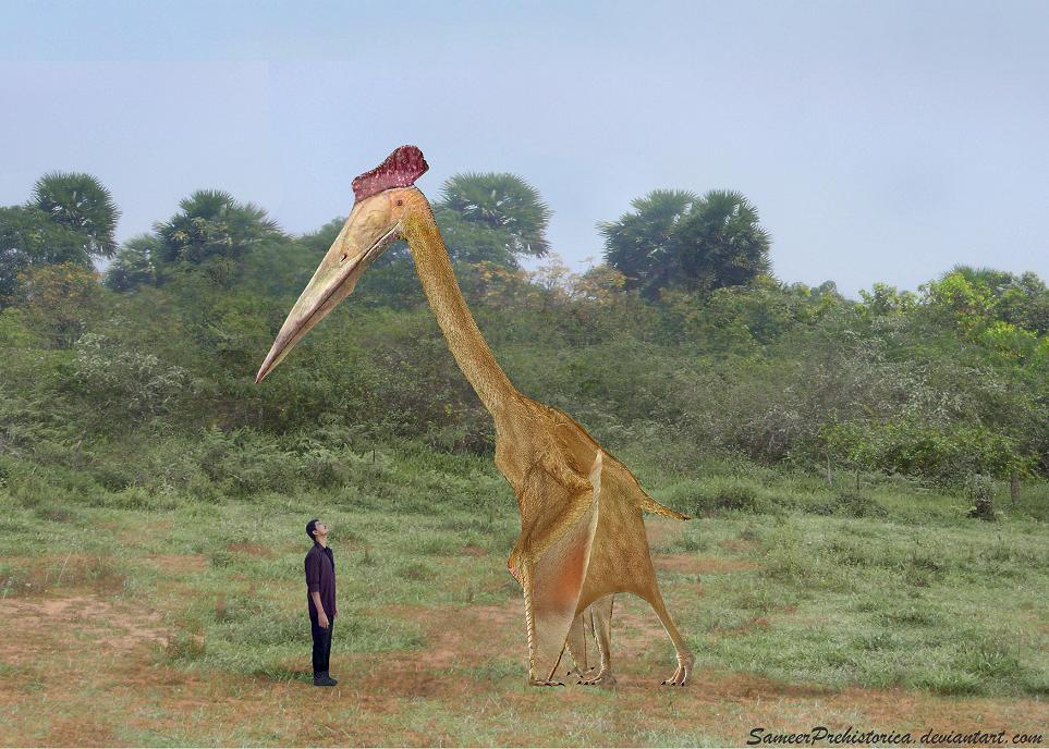 Image result for hatzegopteryx