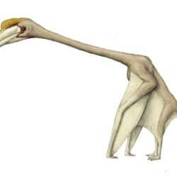 1571_hatzegopteryx_joschua_knuppe
