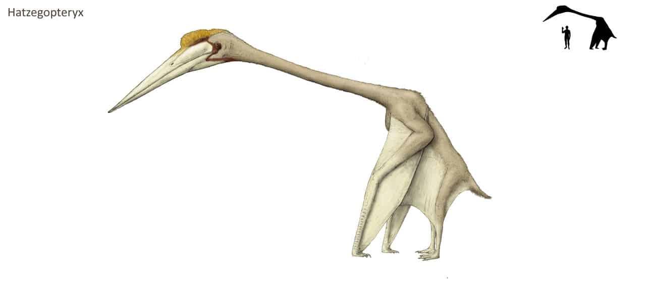 Hatzegopteryx by Joschua Knuppe