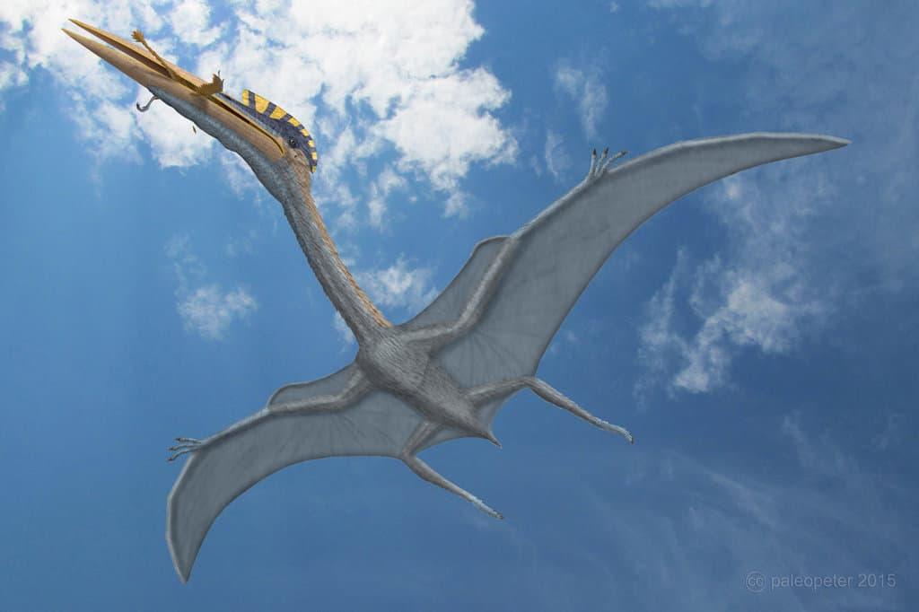 Hatzegopteryx by Peter Montgomery