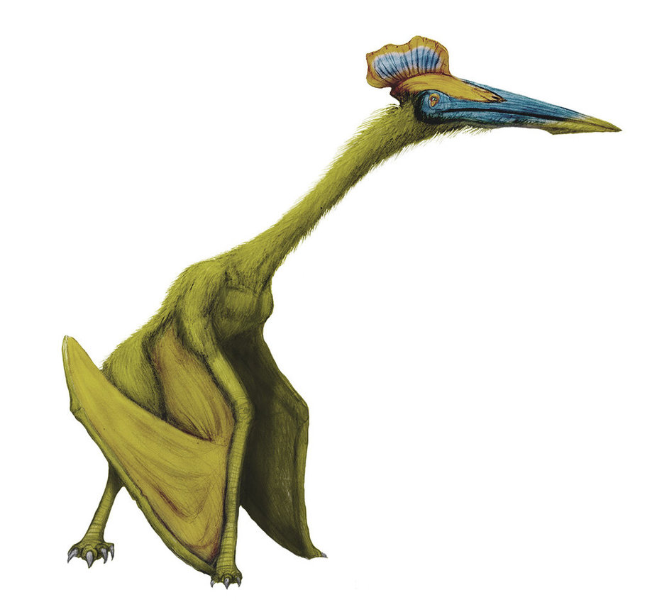 Hatzegopteryx by Paulo Leite