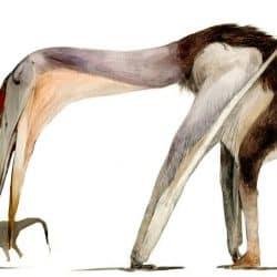 1577_hatzegopteryx_nattawut_wongta
