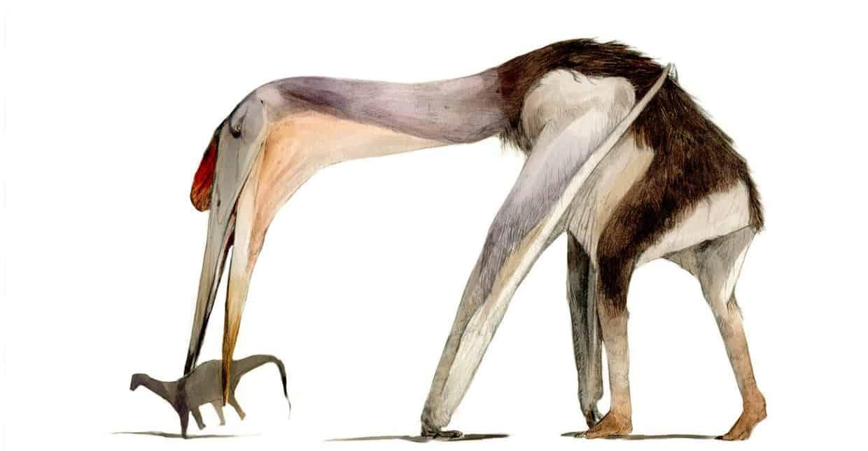 Hatzegopteryx by Nattawut Wongta