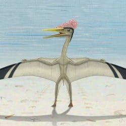 1586_pterodactylus_peter_montgomery
