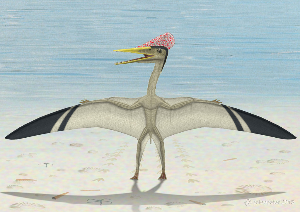 Pterodactylus by Peter Montgomery
