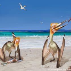 1587_pterodactylus_akeiron