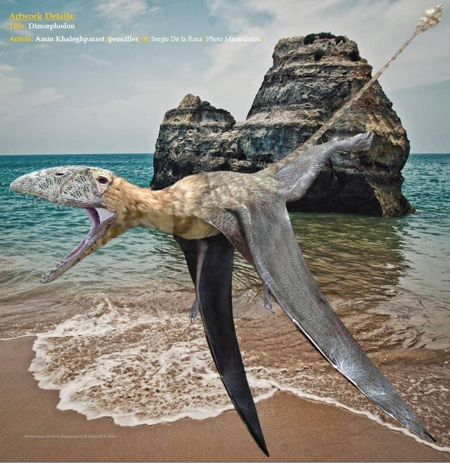 Dimorphodon by Amin Khaleghparast