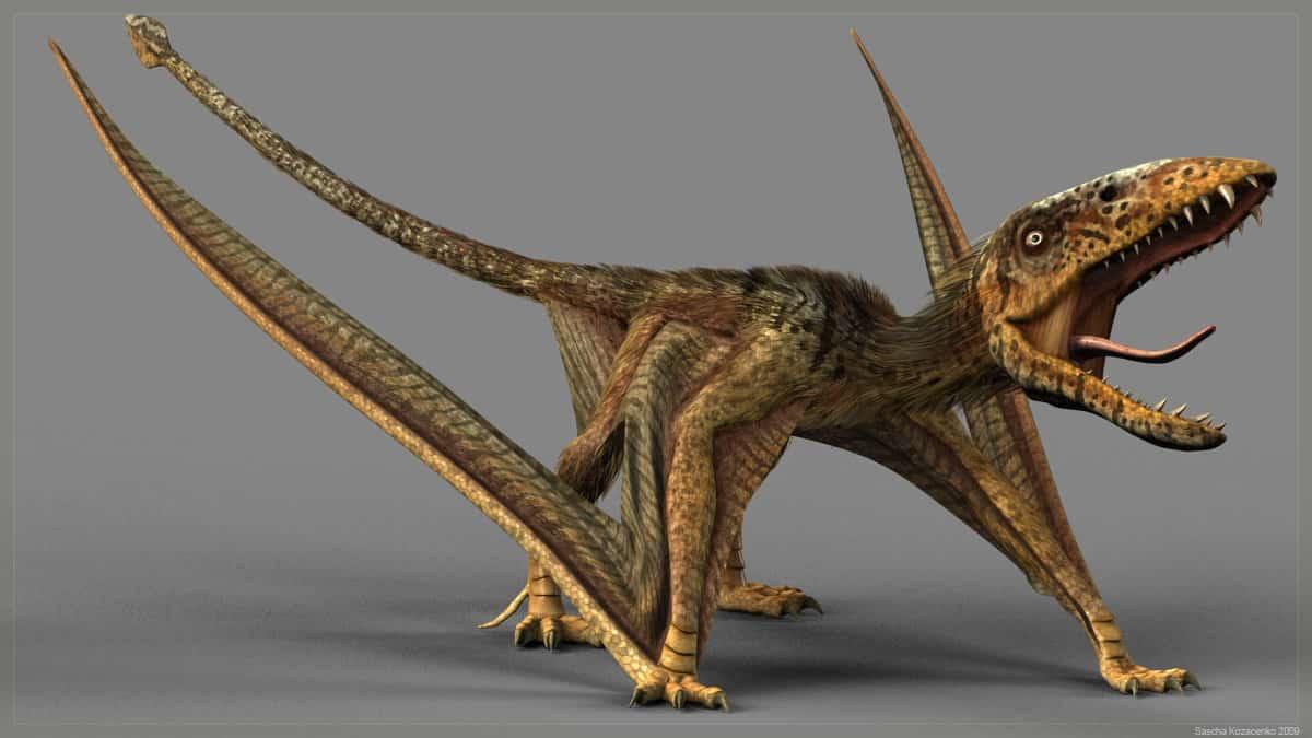 Dimorphodon by Sascha Kozacenko