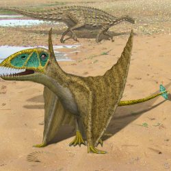 1593_dimorphodon_peter_montgomery
