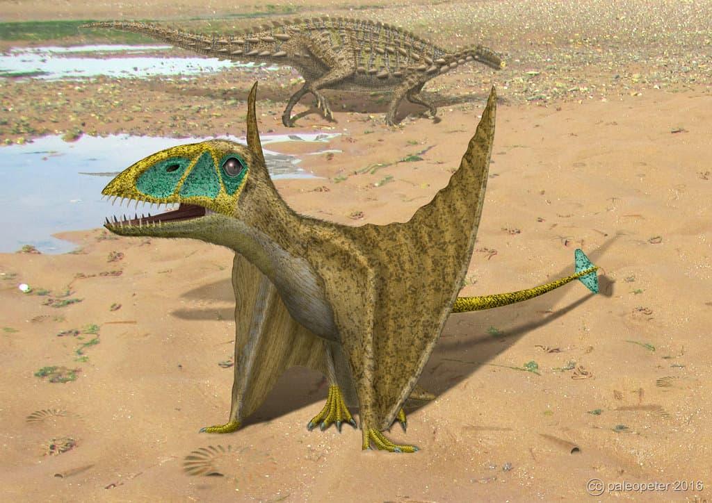 Dimorphodon by Peter Montgomery
