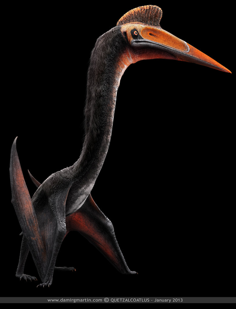 Quetzalcoatlus - Facts and Pictures