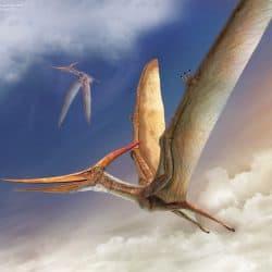 1606_pteranodon_vlad_konstantinov