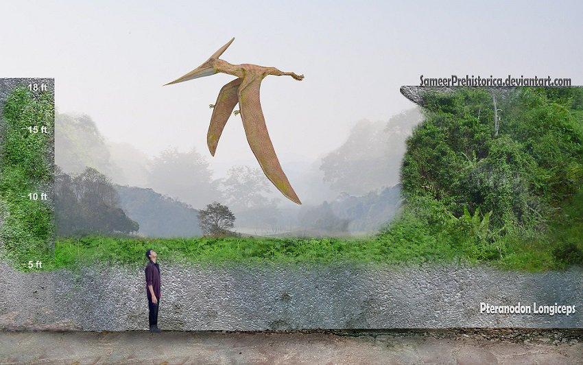 Pteranodon by SameerPrehistorica