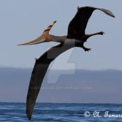 1610_pteranodon_nobu_tamura