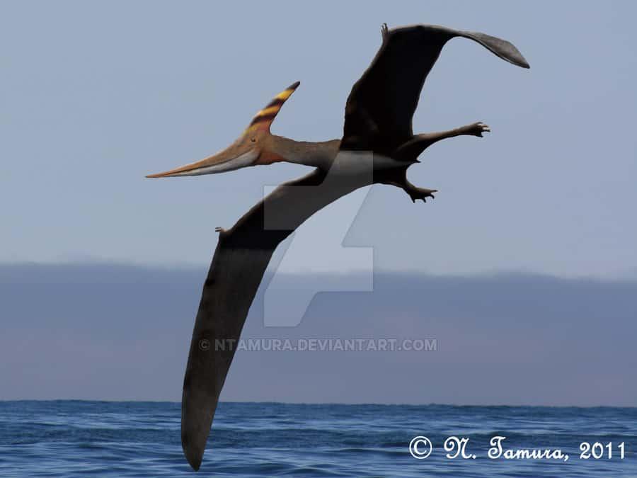 Pteranodon by Nobu Tamura