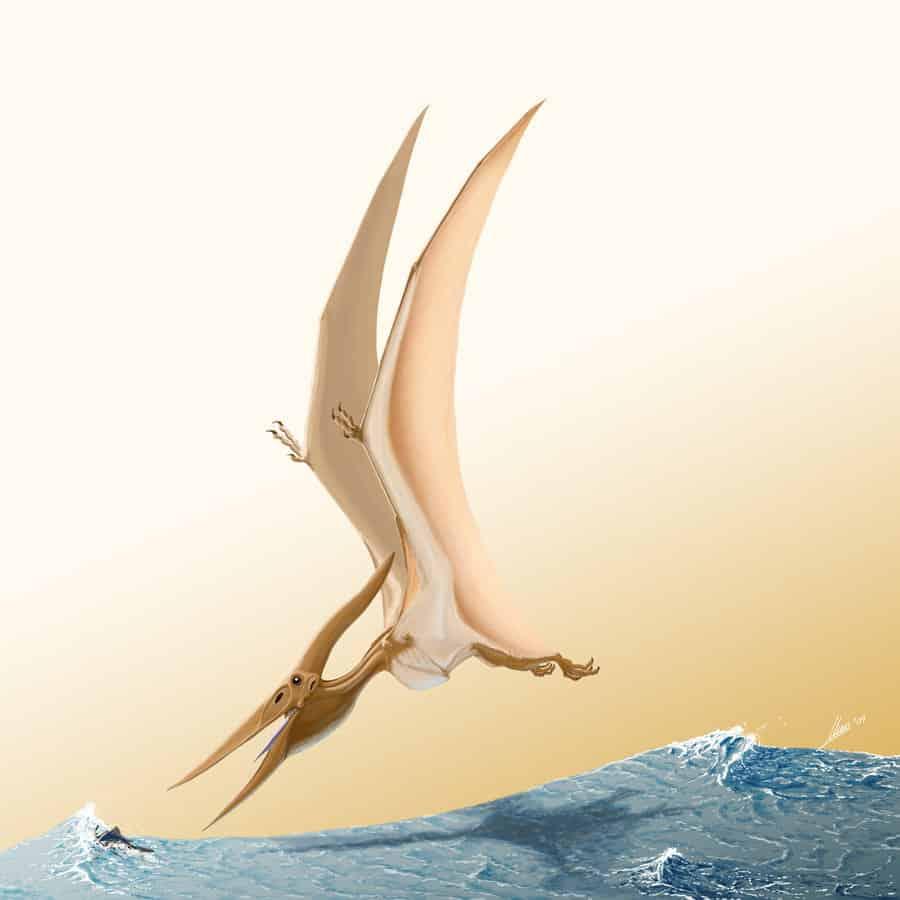 Pteranodon by Gonzalo Jara