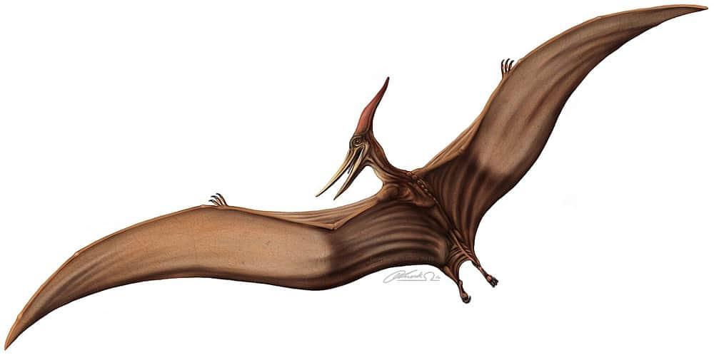 Pteranodon by Leitplankenmonster