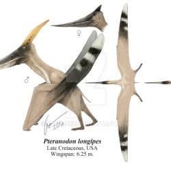 1616_pteranodon_gabriel