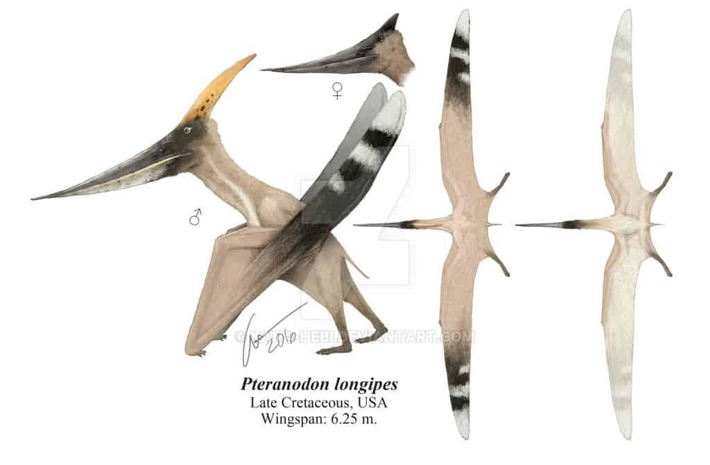 Pteranodon by Gabriel