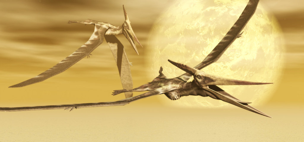 Pteranodon by Steven Thompson