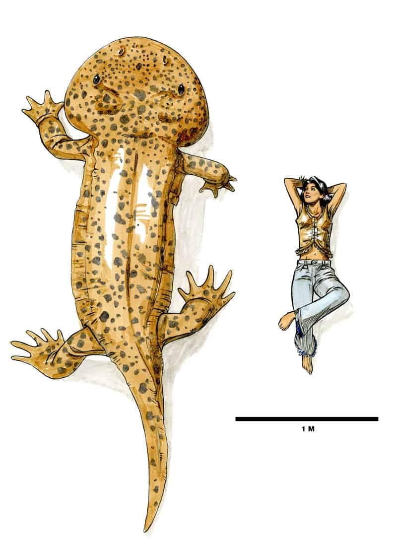 Koolasuchus by dewlap