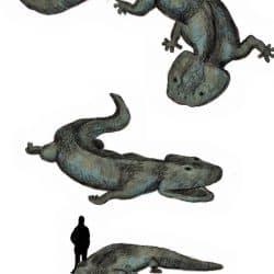 616_koolasuchus_bertramus