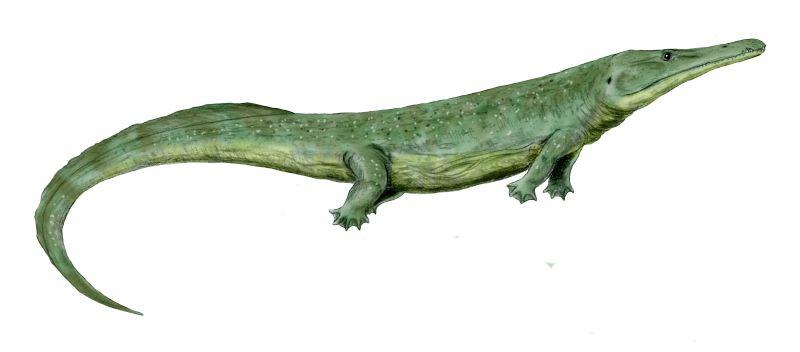 Prionosuchus by Nobu Tamura