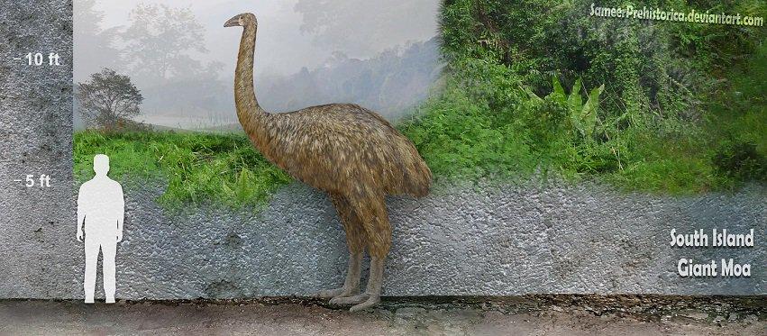 Giant Moa by SameerPrehistorica