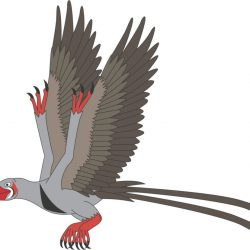 662_confuciusornis_nick_dodge