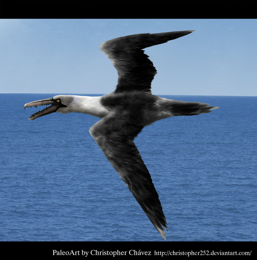 Pelagornis by Christopher Chavez