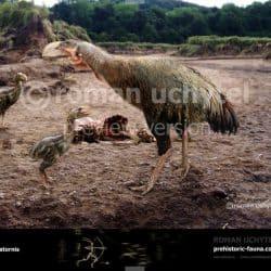 679_gastornis_prehistoricanimals