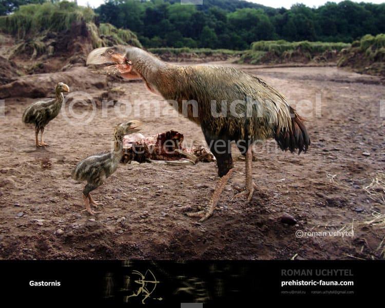 Gastornis by PrehistoricAnimals