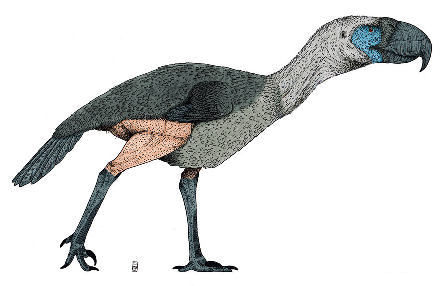 Gastornis by Smnt2000