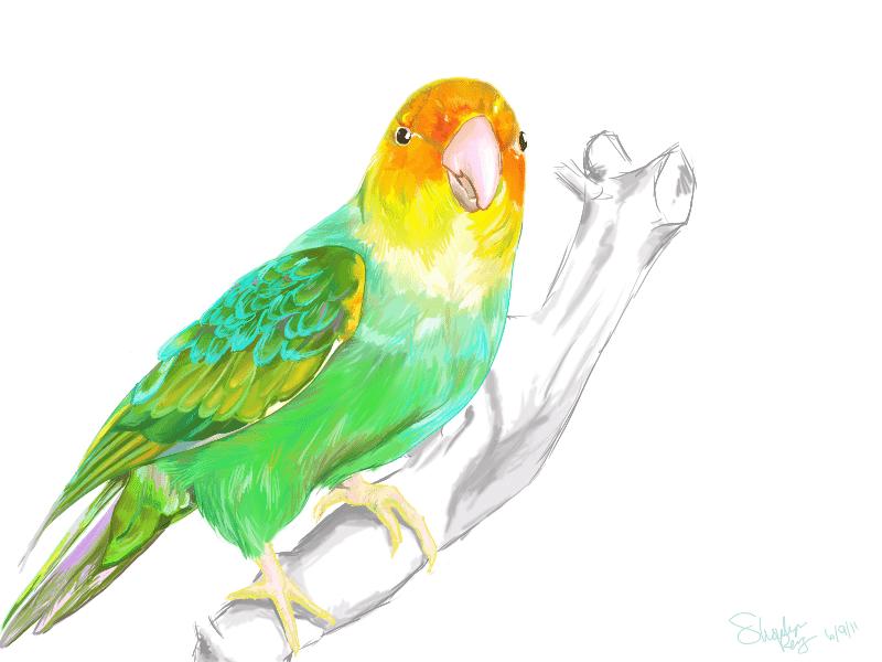 Carolina Parakeet by S-hui