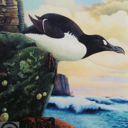 692_great auk_david_harris