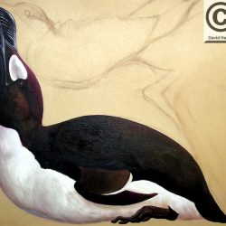 695_great auk_david_harris