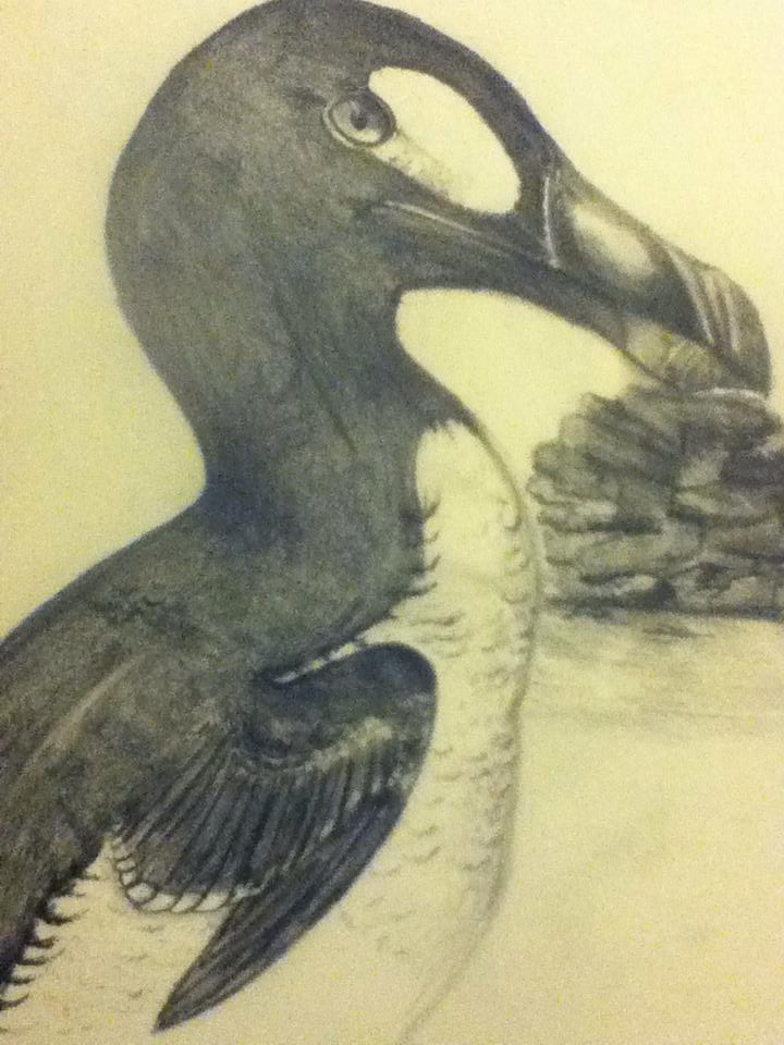 Great Auk by Madeline
