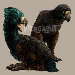 720_terror bird_viergacht