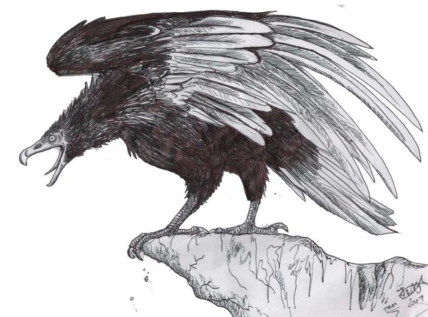 Argentavis - Facts and Pictures - photo#21