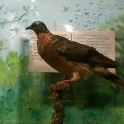730_passenger pigeon_ringette-and-riding